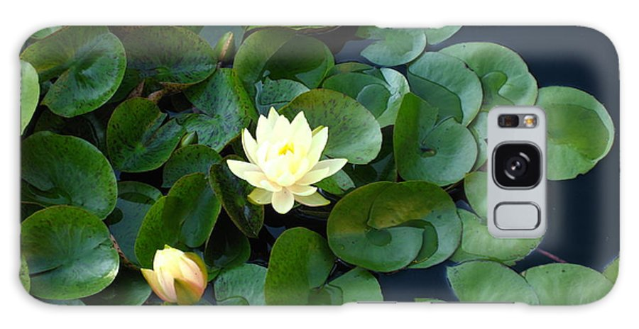 Water Lily Galaxy S8 Case featuring the photograph Elegant Water Lily by Sherry Oliver