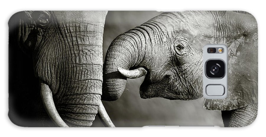 Elephant; Interact; Touch; Gently; Trunk; Young; Large; Small; Big; Tusk; Together; Togetherness; Passionate; Affectionate; Behavior; Art; Artistic; Black; White; B&w; Monochrome; Image; African; Animal; Wildlife; Wild; Mammal; Animal; Two; Moody; Outdoor; Nature; Africa; Nobody; Photograph; Addo; National; Park; Loxodonta; Africana; Muddy; Caring; Passion; Affection; Show; Display; Reach Galaxy Case featuring the photograph Elephant affection by Johan Swanepoel