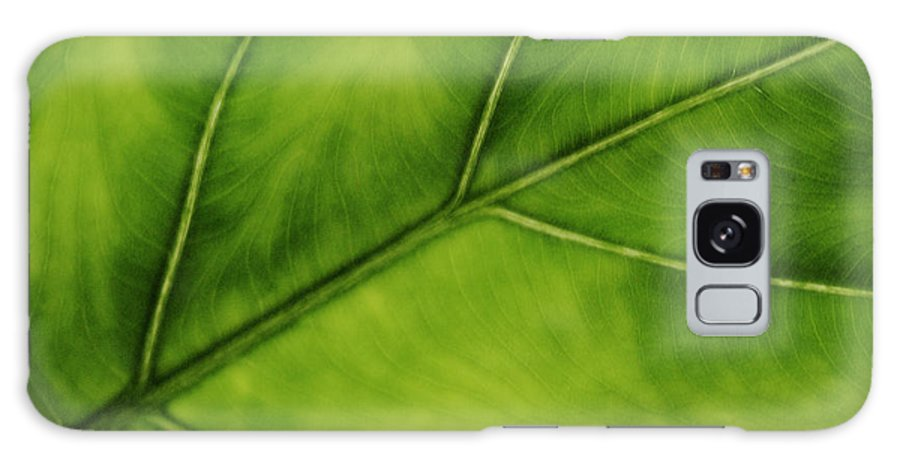 Leaf Galaxy S8 Case featuring the photograph Elephant Ear by Marilyn Hunt