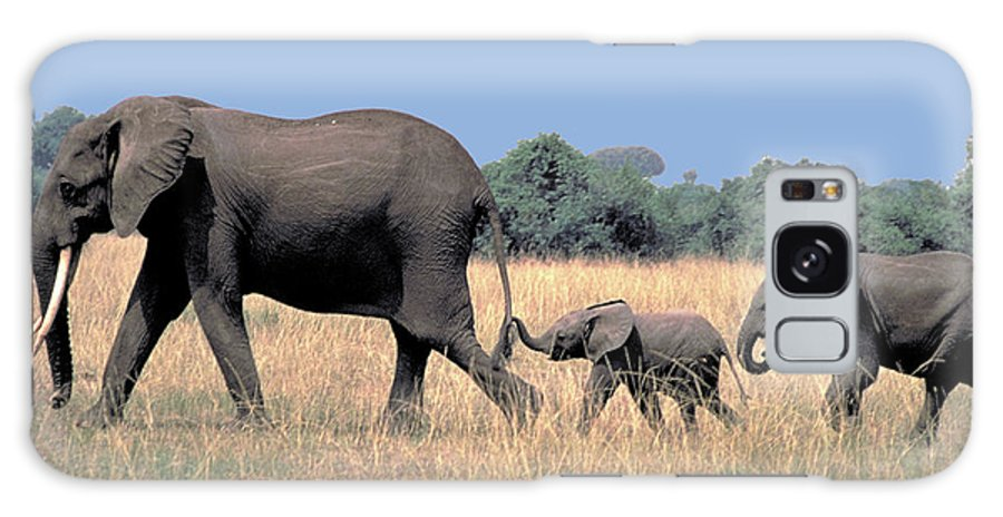 Elephant Galaxy Case featuring the photograph Elephant Family by Carl Purcell