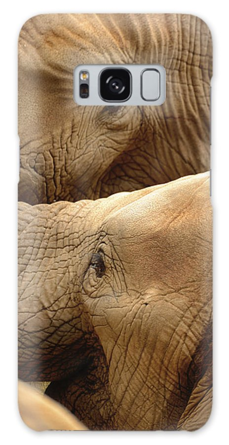 Elephants Galaxy S8 Case featuring the photograph Elephants by Thomas Morris