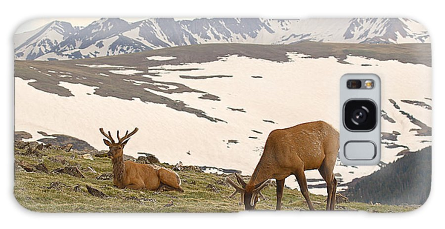 Elk Galaxy Case featuring the photograph Elk Bulls In The Highlands Of Colorado by Max Allen
