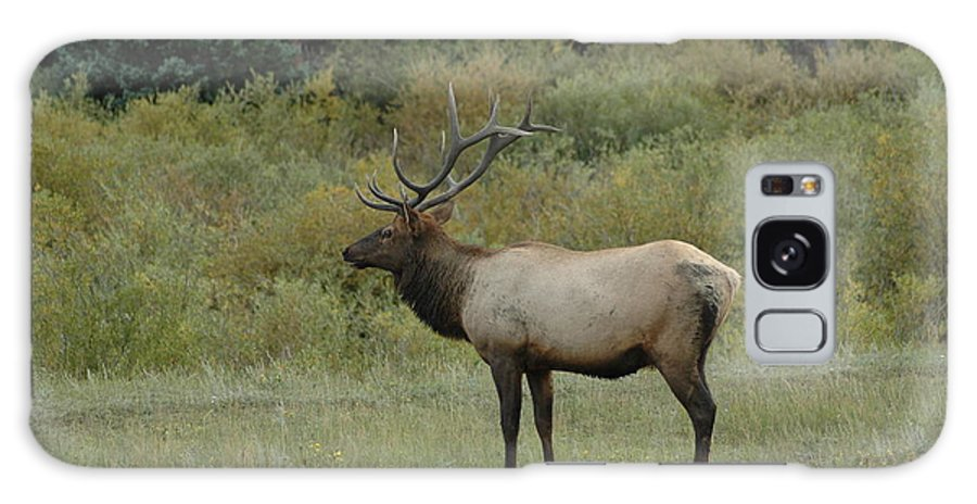 Elk Galaxy S8 Case featuring the photograph Elk by Kathy Schumann