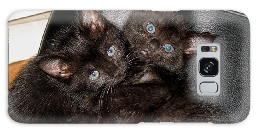 Cats Galaxy S8 Case featuring the photograph Ellen And Elvira by Kenneth Albin