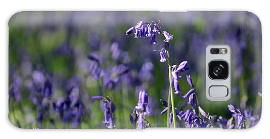 English Bluebells In Bloom Epsom Surrey Uk English Bluebells Wood Effingham Surrey Uk Countryside Landscape Blue Flowers Traditional Scene Woodland Bluebell Forest Picturesque Close Up Galaxy S8 Case featuring the photograph English Bluebells In Bloom by Julia Gavin
