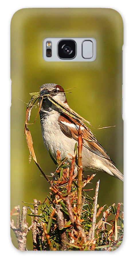 Sparrow Galaxy S8 Case featuring the photograph English Sparrow Bringing Material To Build Nest by Max Allen