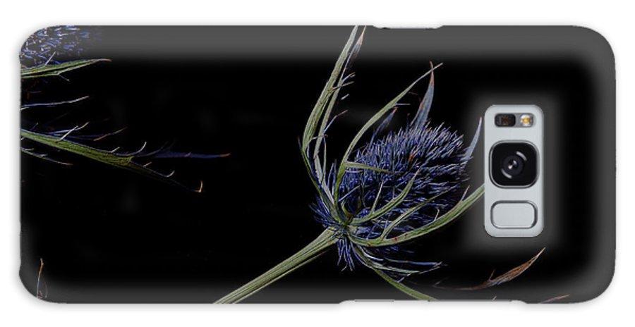 Eryngium Galaxy S8 Case featuring the photograph Eryngium by Kathleen Kent