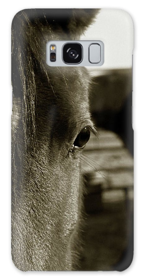 Horses Galaxy S8 Case featuring the photograph Espresso Eye by Toni Hopper