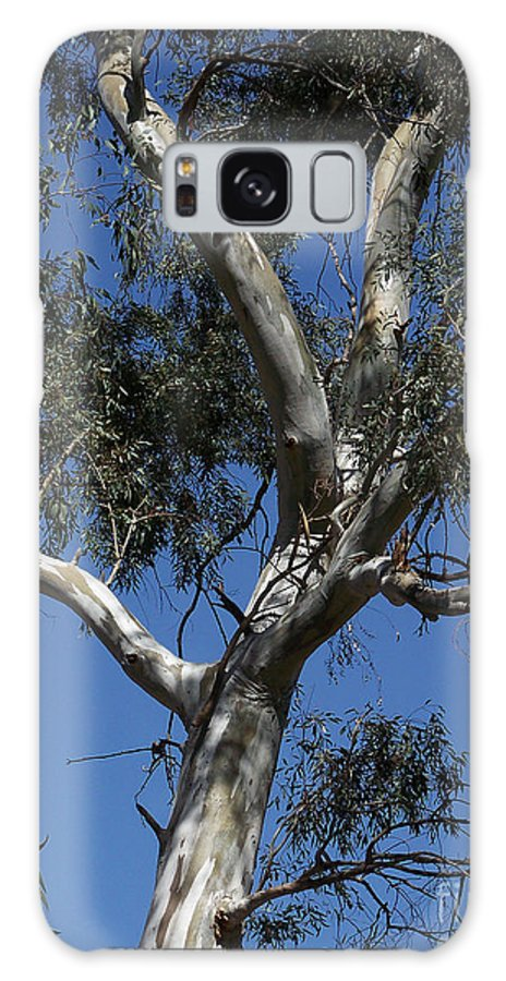 Trees Galaxy S8 Case featuring the photograph Eucalyptus by Kathy McClure