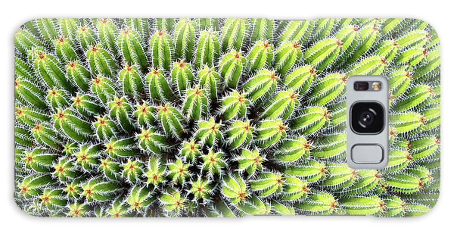 Cactus Galaxy S8 Case featuring the photograph Euphorbia by Delphimages Photo Creations
