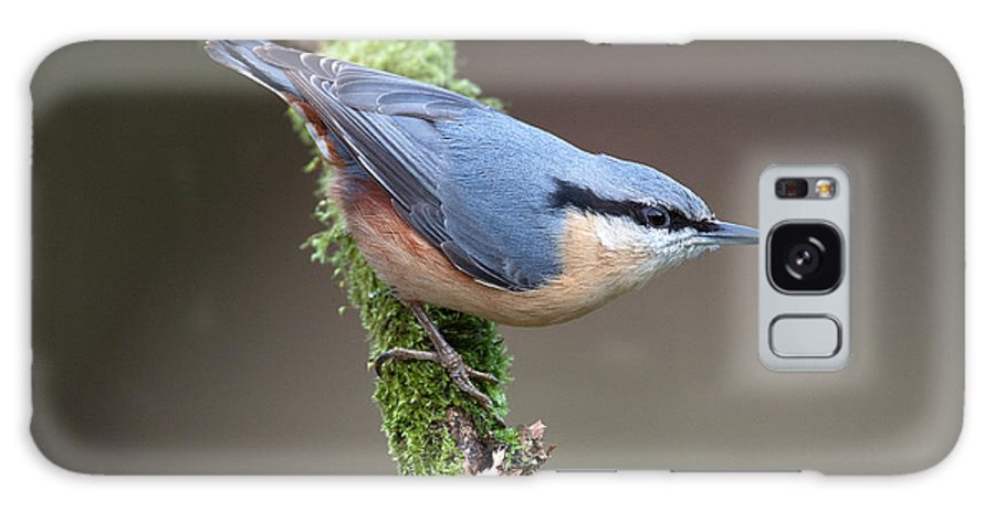 Nuthatch Galaxy S8 Case featuring the photograph European Nuthatch by Bob Kemp