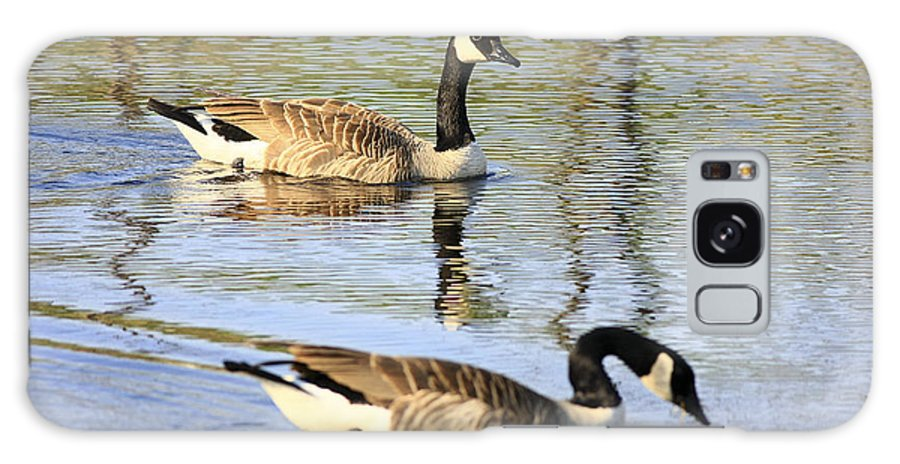 Geese Galaxy S8 Case featuring the photograph Evening Light On Nature by Deborah Benoit
