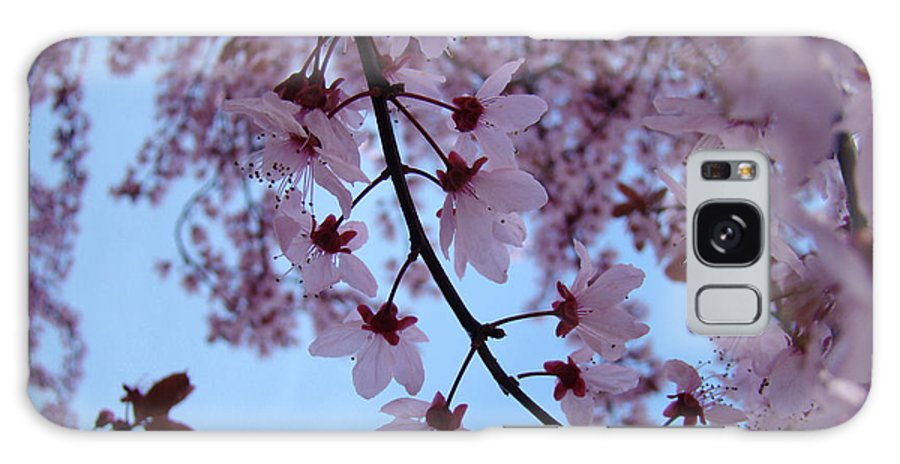 Blossom Galaxy S8 Case featuring the photograph Evening Sky Pink Blossoms Art Prints Canvas Spring Baslee Troutman by Baslee Troutman