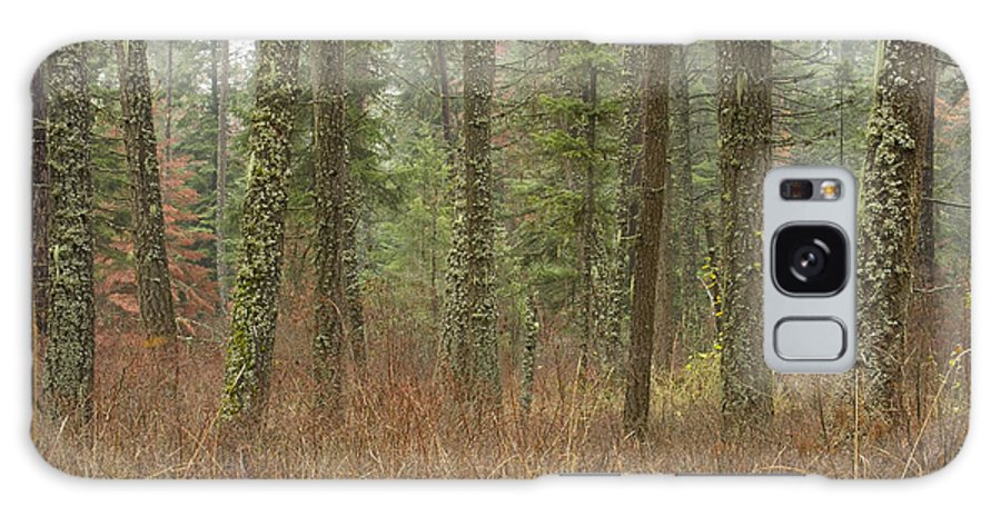 Fir Galaxy Case featuring the photograph Evergreen Fog by Idaho Scenic Images Linda Lantzy