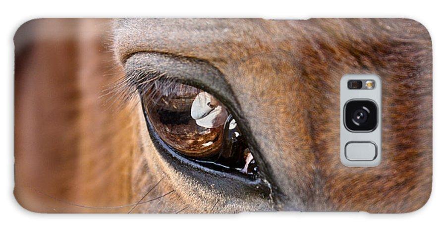 Horse Galaxy S8 Case featuring the photograph Eye See You Too by Hannah Breidenbach