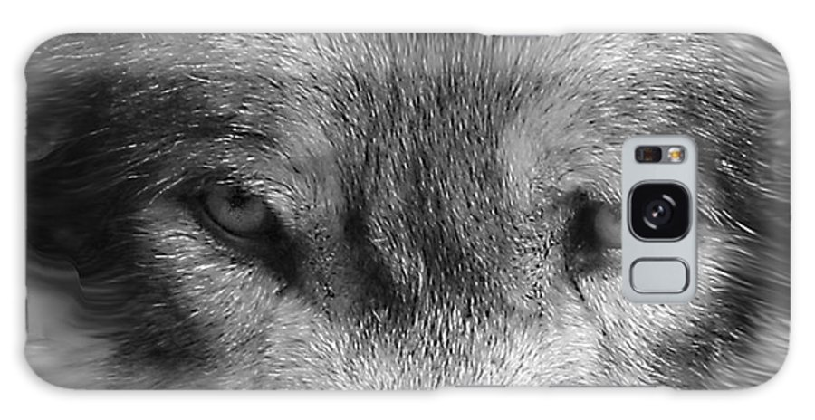 Wolf Canid Canus Lupis Wildlife Grey Gray Timberwolf Animal Mammal Photograph Photograhy Eyes Black White Desaturate Galaxy S8 Case featuring the photograph Eyes Of The Wild by Shari Jardina
