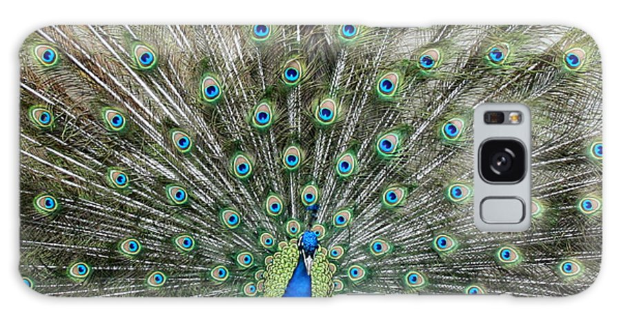 Peacock Galaxy S8 Case featuring the photograph Eyes See You by George Jones