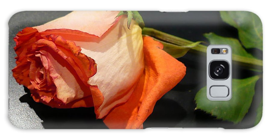 Botanical Galaxy Case featuring the photograph Fading Rose by Florene Welebny