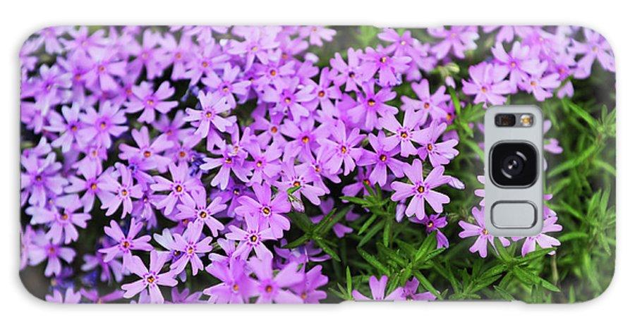 Jenny Rainbow Fine Art Photography Galaxy S8 Case featuring the photograph Fairy Foxglove Purple Flowers by Jenny Rainbow