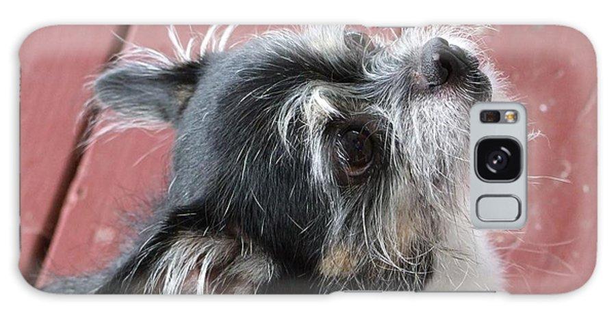 Kauai Animals Galaxy S8 Case featuring the photograph Faith by Mary Deal