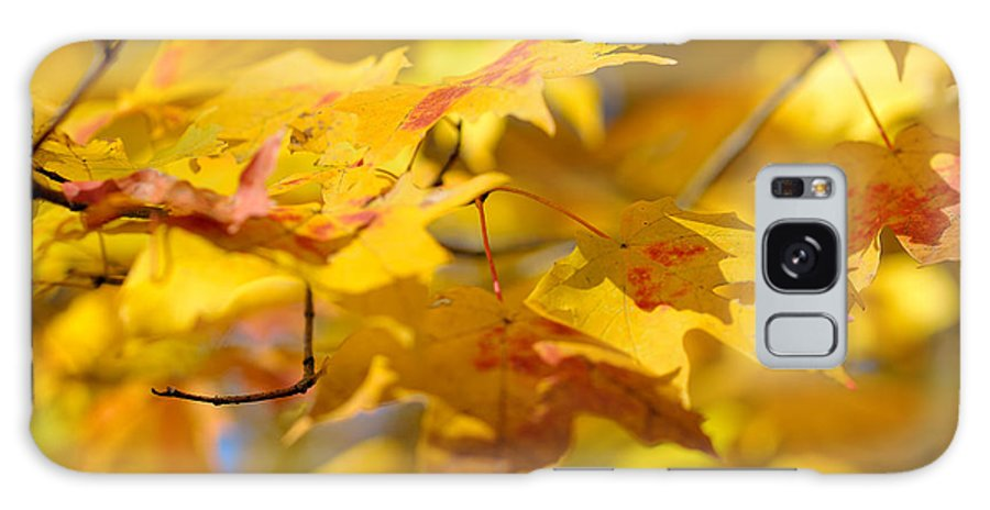 Nature Galaxy S8 Case featuring the photograph Fall Colors by Sebastian Musial