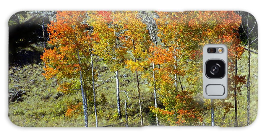 Galaxy S8 Case featuring the photograph Fall In Colorado by Marty Koch