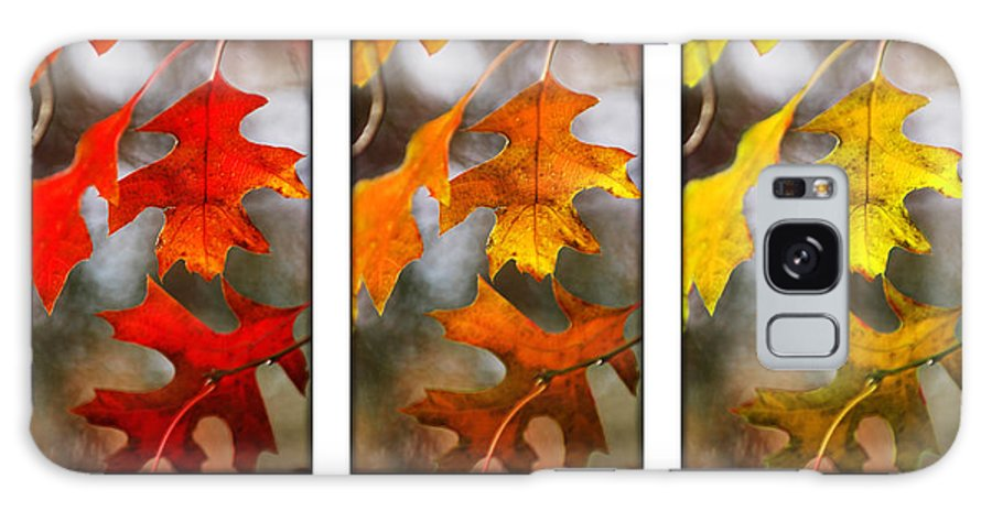 Leaves Galaxy S8 Case featuring the photograph Fall Leaves by Jill Reger