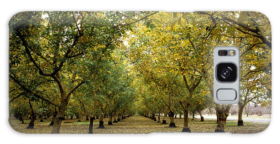 Trees Galaxy S8 Case featuring the photograph Fall Orchard by Kathy Yates