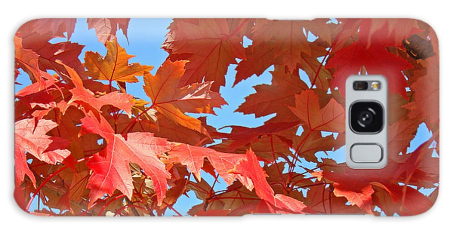 Autumn Galaxy S8 Case featuring the photograph Fall Tree Leaves Red Orange Autumn Leaves Blue Sky by Baslee Troutman
