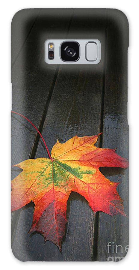 Leaf Autumn Fall Rain Color Galaxy S8 Case featuring the photograph Fall by Winston Rockwell