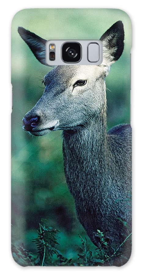 Fallow Galaxy S8 Case featuring the photograph Fallow Deer Fawn by Steve Somerville