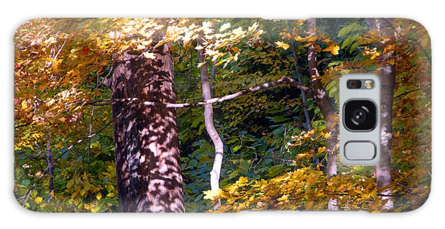 Fall Trees Galaxy S8 Case featuring the photograph Falls Splendor by John Lautermilch