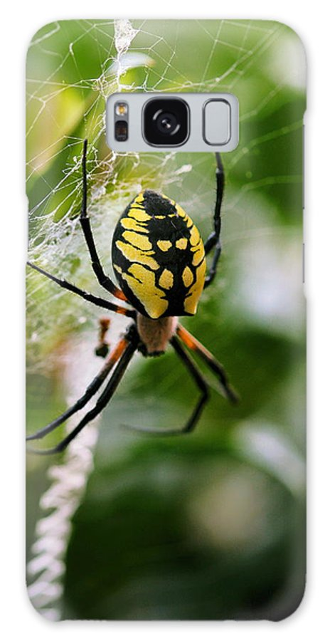 Argiope Galaxy S8 Case featuring the photograph False Threats by Angela Rath