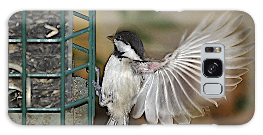 Chickadee In Flight Galaxy S8 Case featuring the photograph Fan Dance by Faith Harron Boudreau