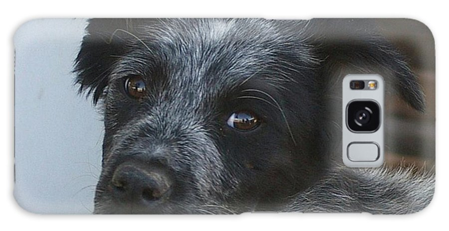 Canines Galaxy S8 Case featuring the photograph Farm Puppy by Jeff Swan