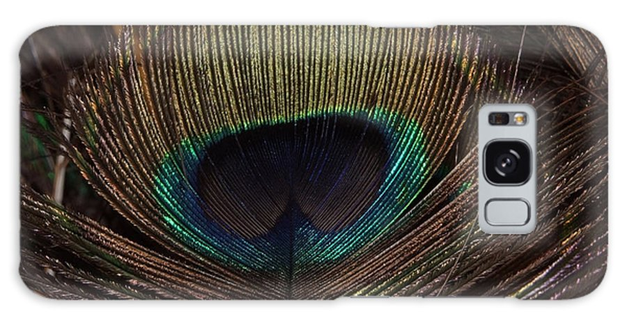 Feathers Galaxy S8 Case featuring the photograph Feather by Cliff Norton