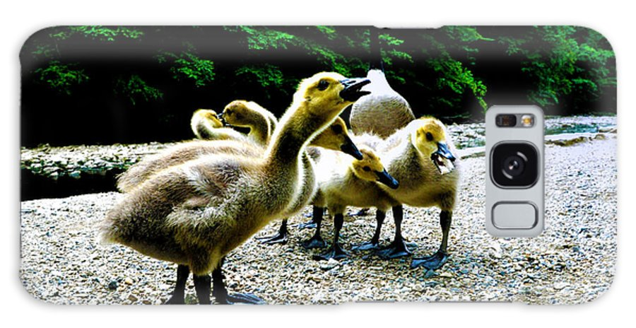 Geese Galaxy S8 Case featuring the photograph Feed Me Seymore - Baby Geese by Bill Cannon