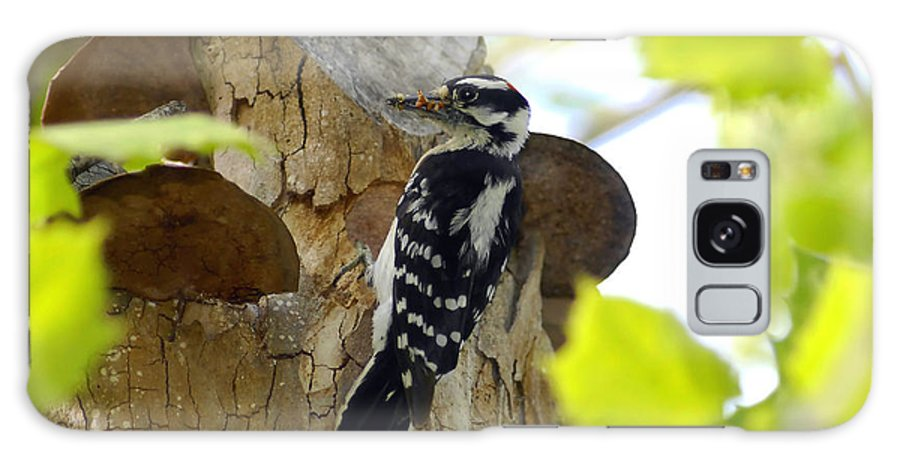 Downy Woodpecker Galaxy S8 Case featuring the photograph Feeding Time by David Lee Thompson