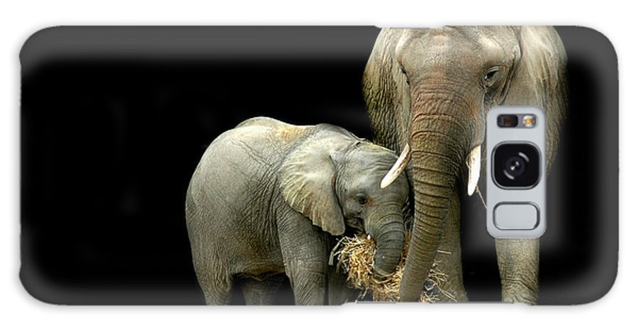 Elephant Galaxy Case featuring the photograph Feeding Time by Stephie Butler
