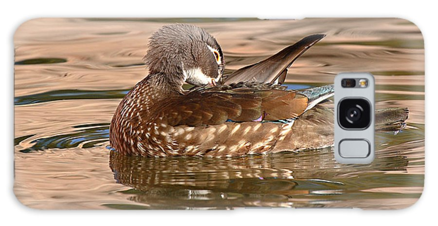 Wood Duck Galaxy S8 Case featuring the photograph Female Wood Duck Preening On The Water by Max Allen