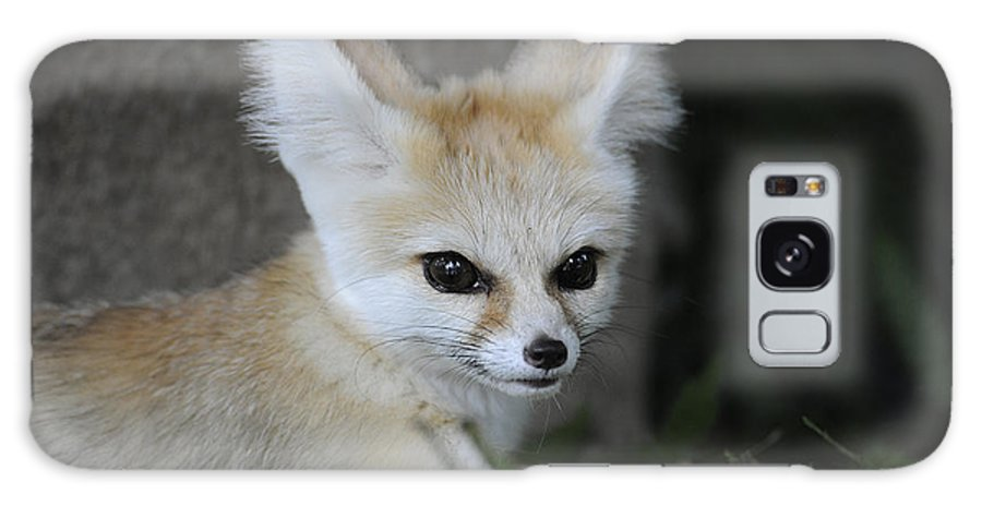 Africa Galaxy S8 Case featuring the photograph Fennec Fox by Keith Lovejoy