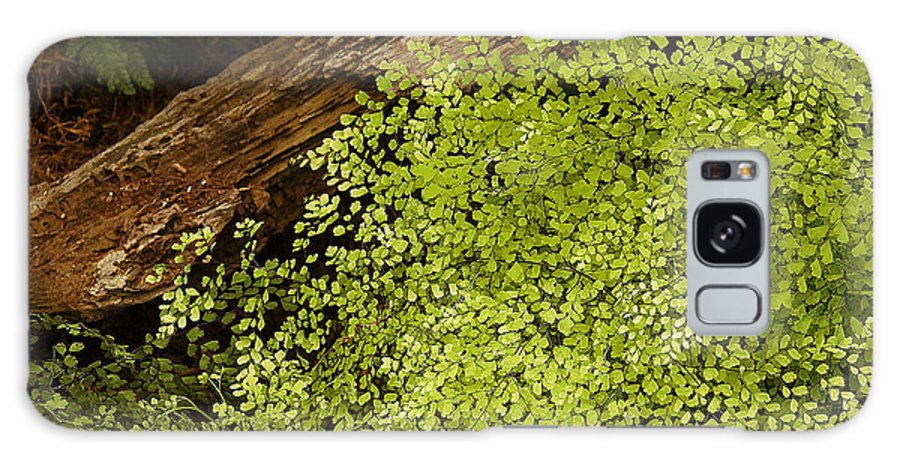 Fern Galaxy S8 Case featuring the photograph Fern Adiantum Microphyllum. by Viktor Savchenko