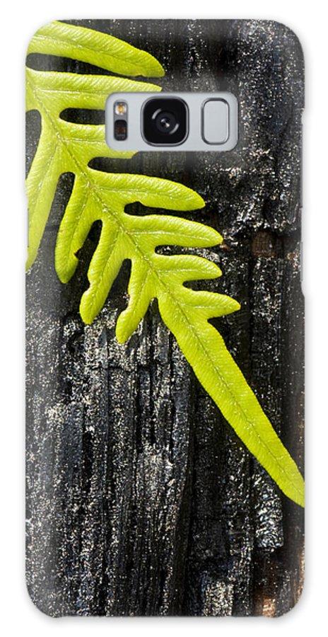 Fern Galaxy S8 Case featuring the photograph Fern On Burnt Log by Bob Decker