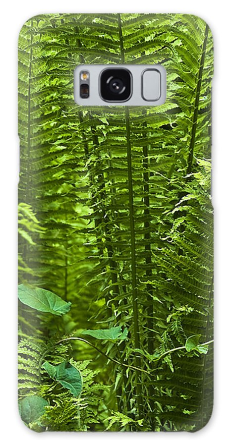 Countryside Galaxy S8 Case featuring the photograph Fern by Svetlana Sewell
