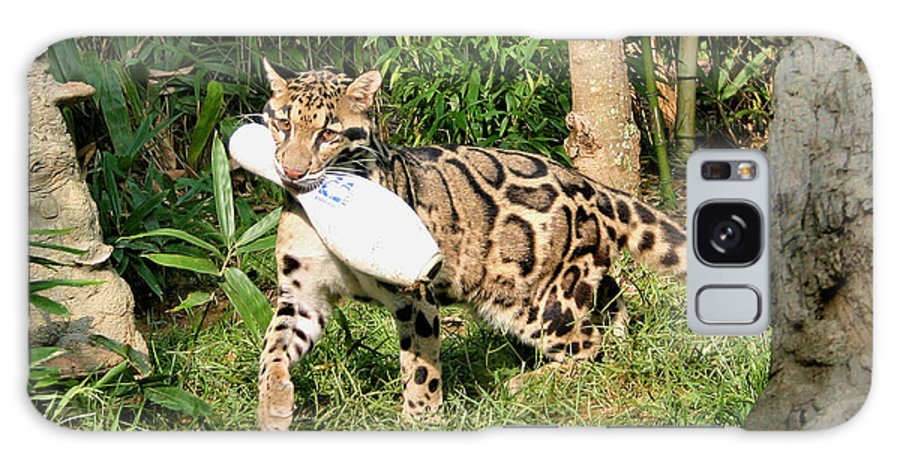 Clouded Leopard Galaxy S8 Case featuring the photograph Fetch by Kristin Elmquist