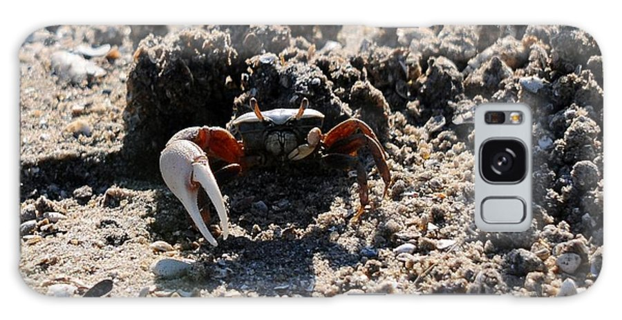 Fiddler Crab Galaxy S8 Case featuring the photograph Fierce Fiddler by Al Powell Photography USA