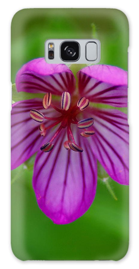 Flowers Galaxy S8 Case featuring the photograph Finding Truth In Nature by Ben Upham III