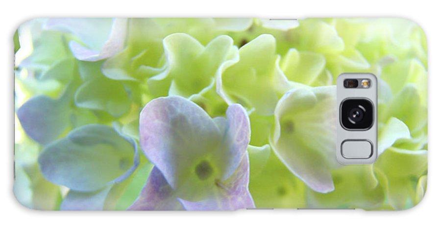 Hydrangea Galaxy S8 Case featuring the photograph Fine Art Prints Hydrangeas Floral Nature Garden Baslee Troutman by Baslee Troutman