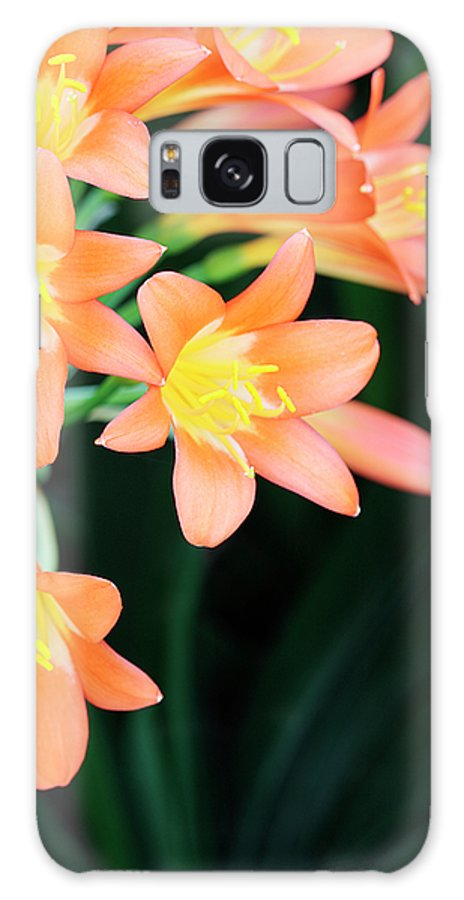 Clivia Galaxy S8 Case featuring the photograph Fire Lily 2 by Neil Overy