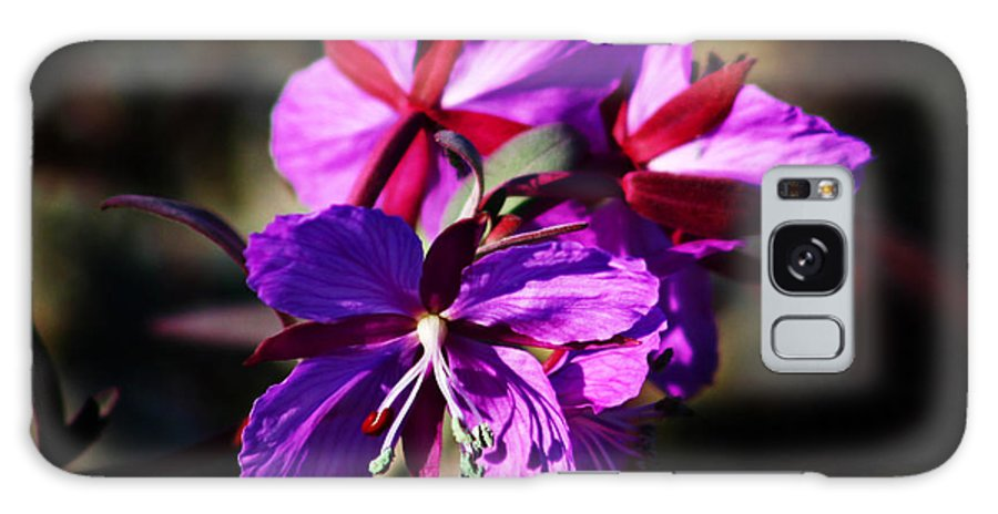 Fireweed Galaxy S8 Case featuring the photograph Fireweed by Anthony Jones